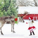 Reindeer and Sparrows: A Christmas Story